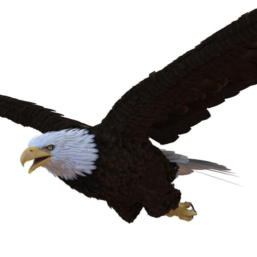 Bald Eagle Pose 4 royalty-free 3d model - Preview no. 10