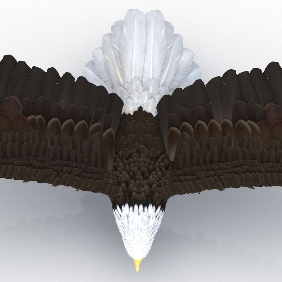 Bald Eagle Pose 4 royalty-free 3d model - Preview no. 17