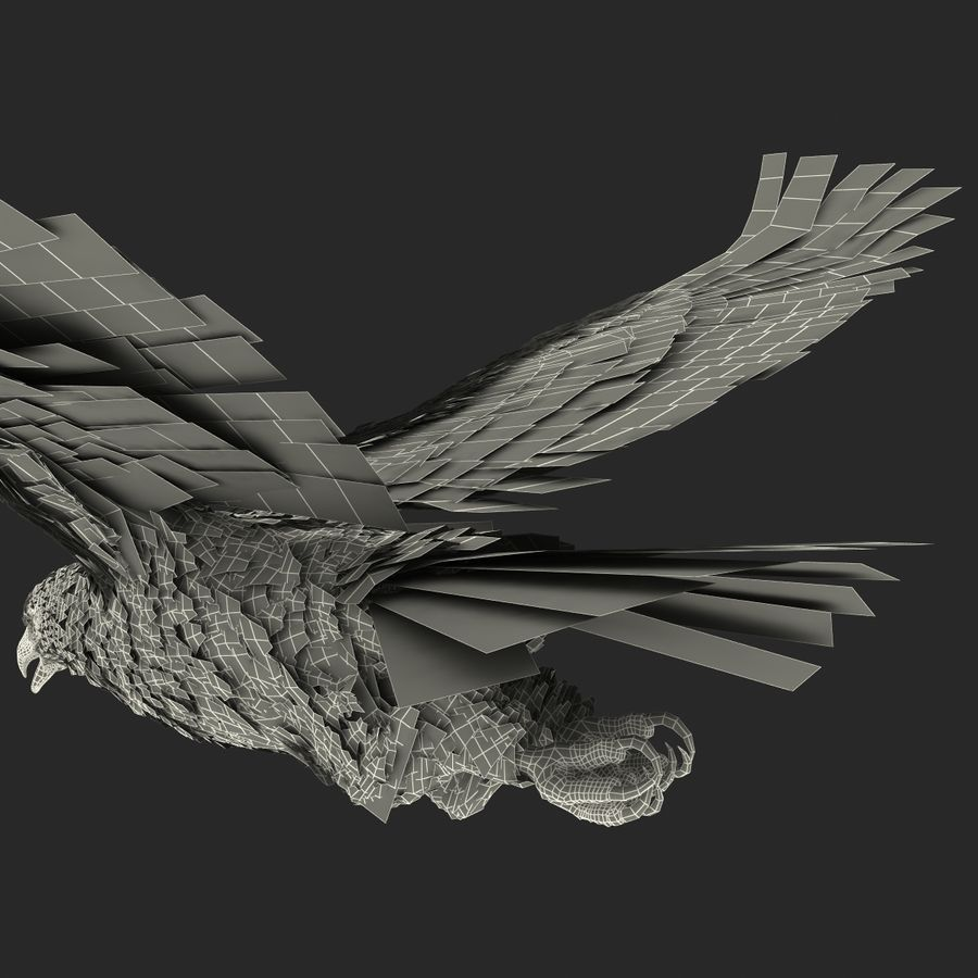 Bald Eagle Pose 4 royalty-free 3d model - Preview no. 31