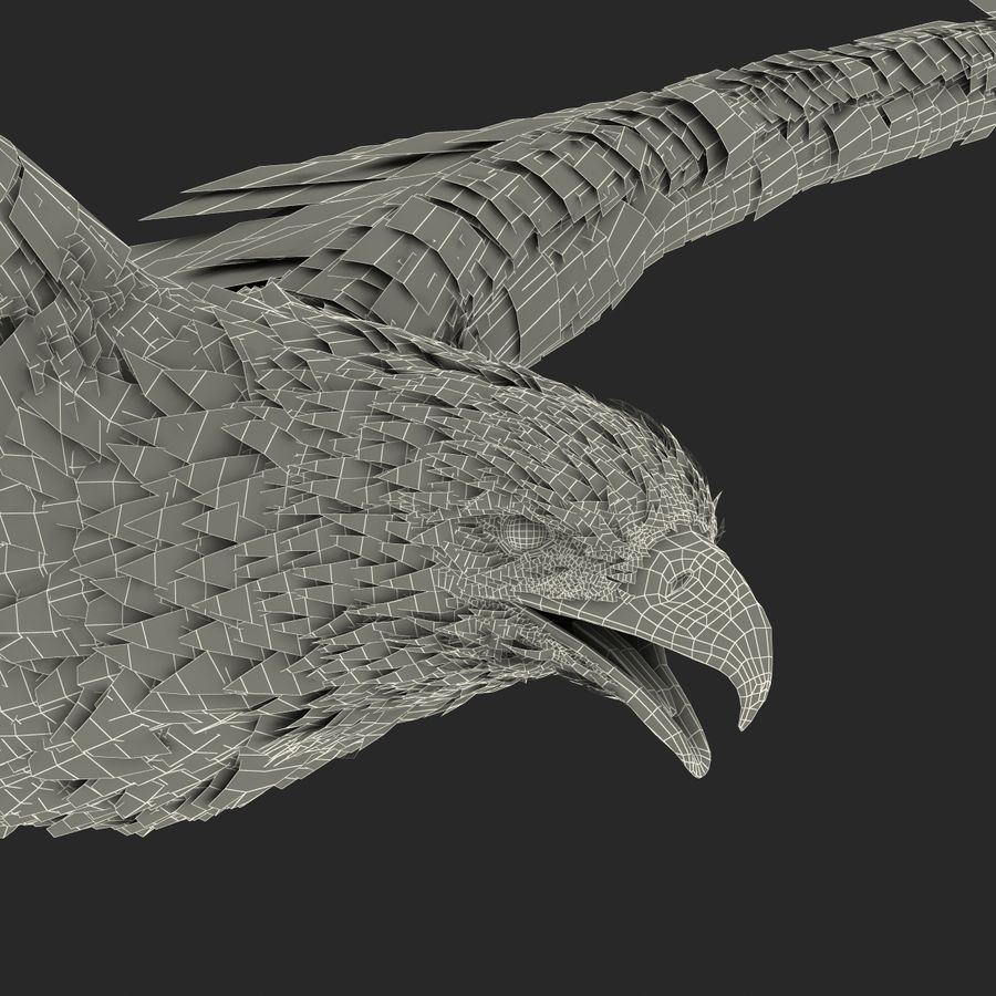 Bald Eagle Pose 4 royalty-free 3d model - Preview no. 32