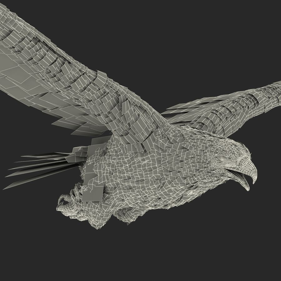 Bald Eagle Pose 4 royalty-free 3d model - Preview no. 28