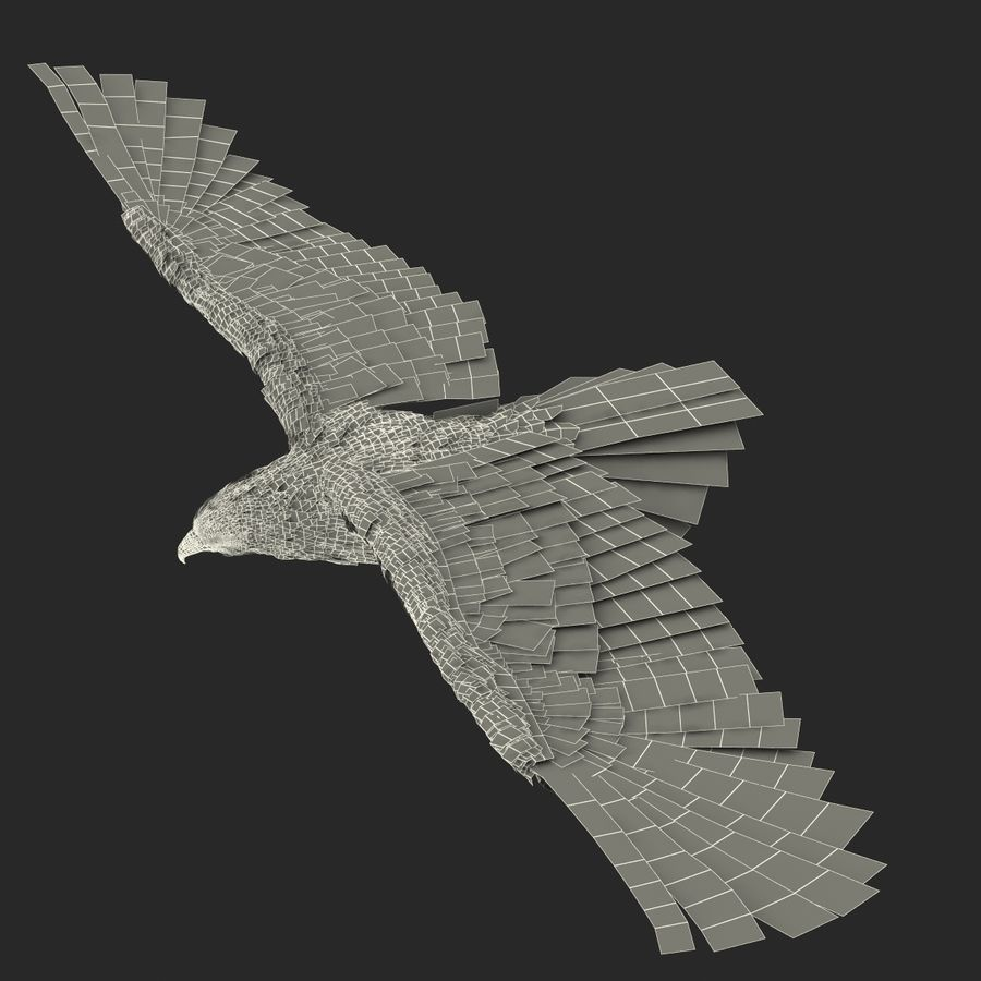 Bald Eagle Pose 3 royalty-free 3d model - Preview no. 26