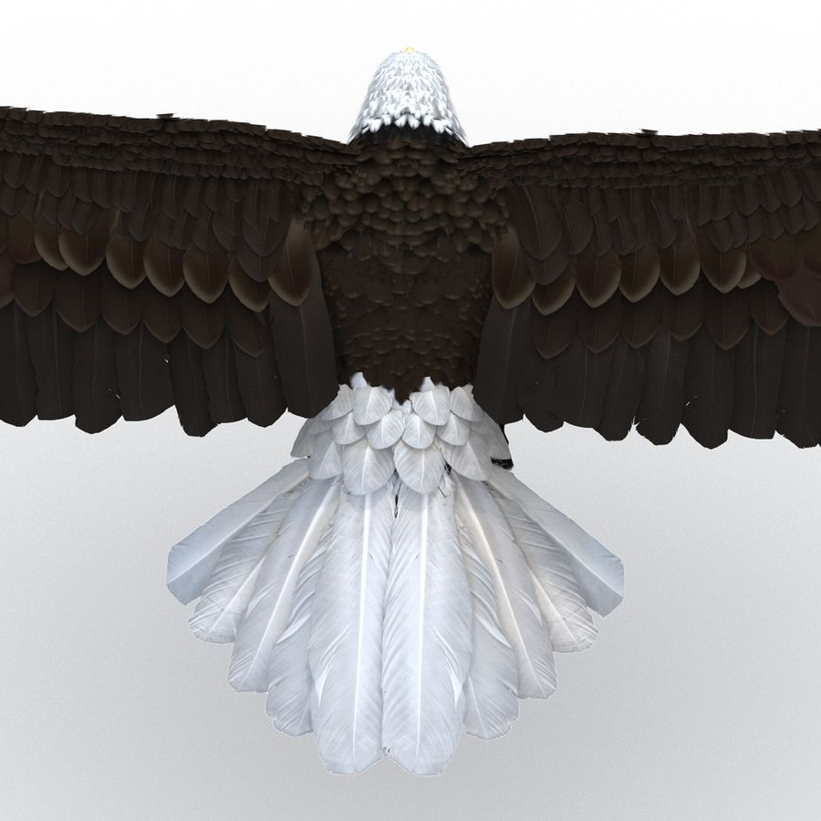 Bald Eagle Pose 3 royalty-free 3d model - Preview no. 15