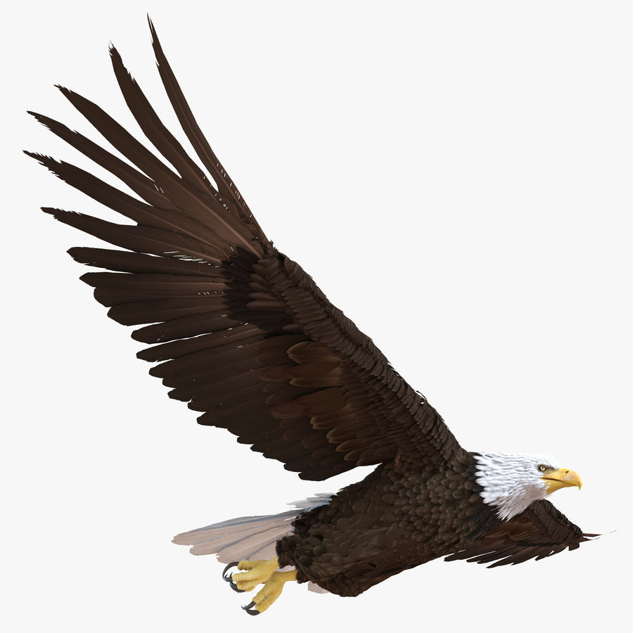 Bald Eagle Pose 3 royalty-free 3d model - Preview no. 1