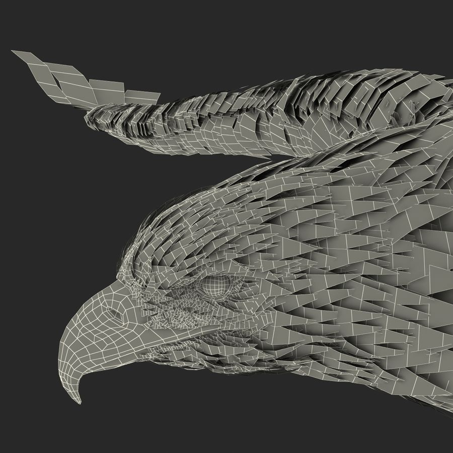 Bald Eagle Pose 3 royalty-free 3d model - Preview no. 31