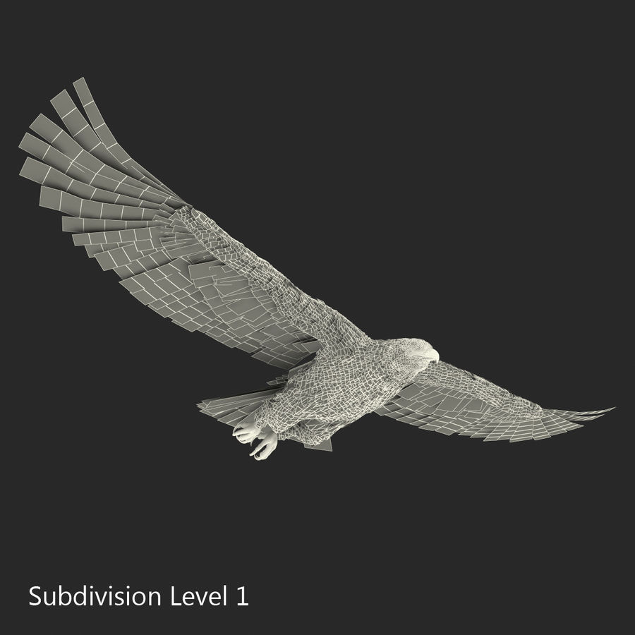 Bald Eagle Pose 3 royalty-free 3d model - Preview no. 19