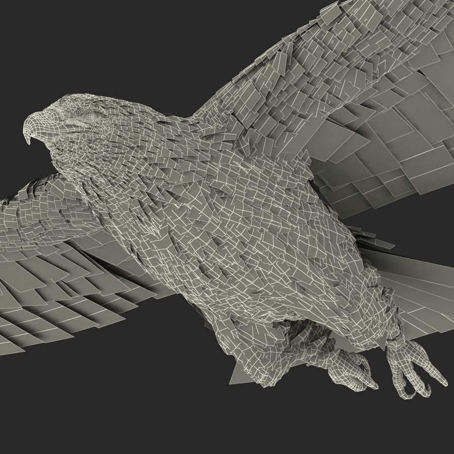 Bald Eagle Pose 3 royalty-free 3d model - Preview no. 29