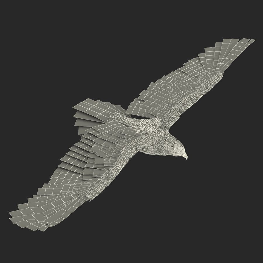Bald Eagle Pose 3 royalty-free 3d model - Preview no. 25