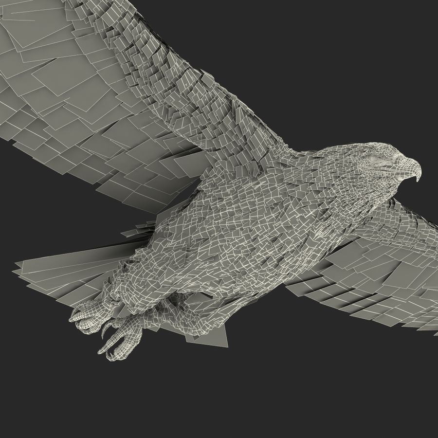 Bald Eagle Pose 3 royalty-free 3d model - Preview no. 28