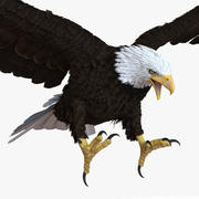 Bald Eagle Pose 2 3d model