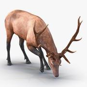 麋鹿姿势3 3d model