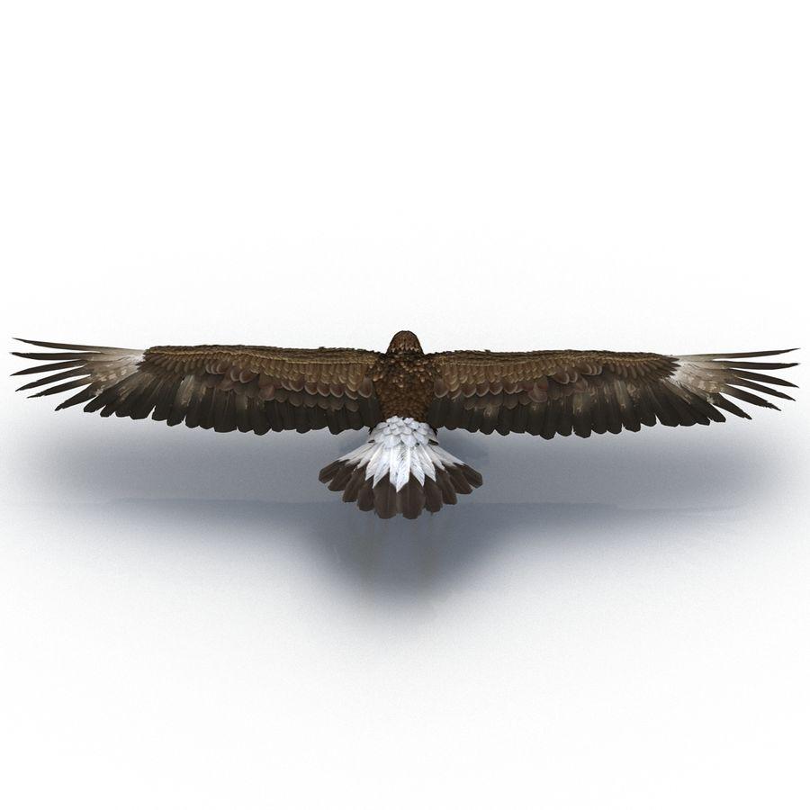 Águila dorada royalty-free modelo 3d - Preview no. 9