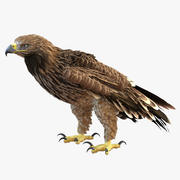 Imperial Eagle Pose 5 3D Model 3d model