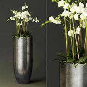 orquídea (1) 3d model
