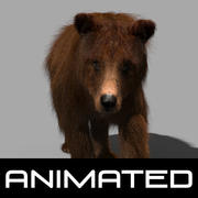 3D animierter wilder Bär 3d model