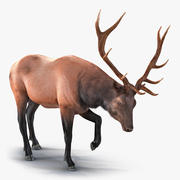 Elk Pose 4 with Fur Model 3D 3d model
