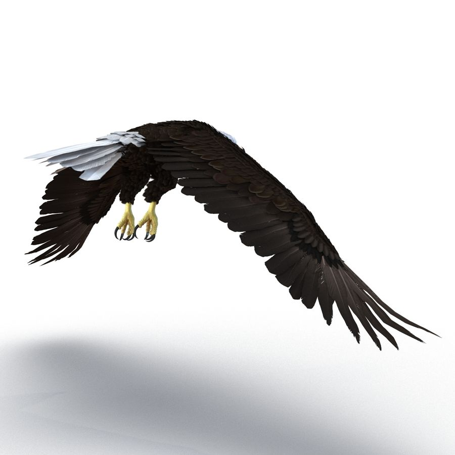 Bald Eagle Rigged royalty-free 3d model - Preview no. 25