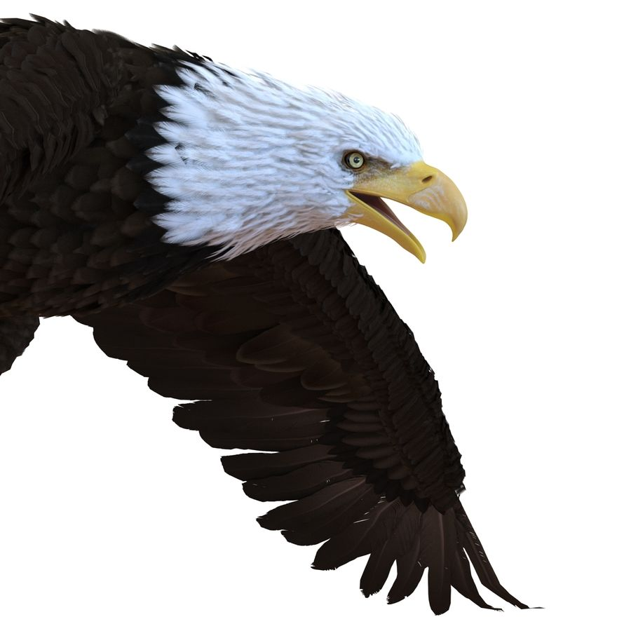 Bald Eagle Rigged royalty-free 3d model - Preview no. 38