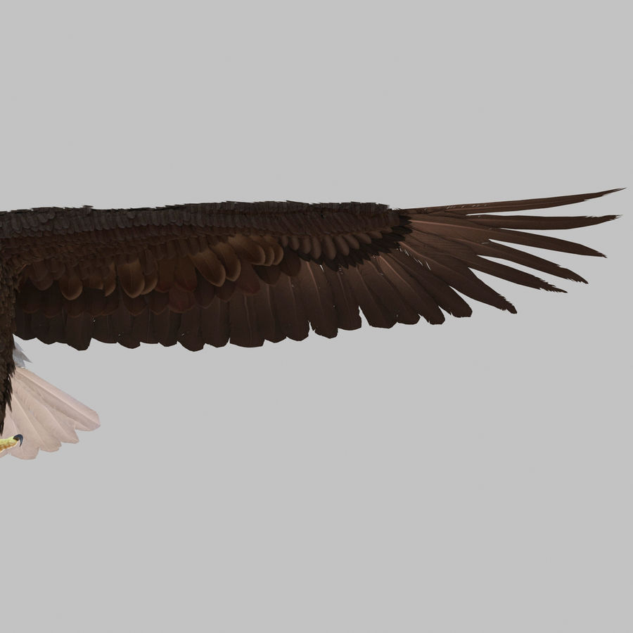 Bald Eagle Rigged royalty-free 3d model - Preview no. 56