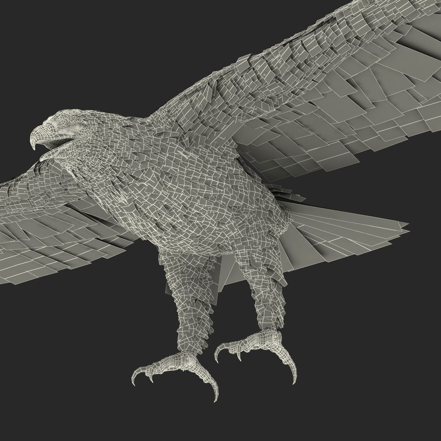 Bald Eagle Rigged royalty-free 3d model - Preview no. 71