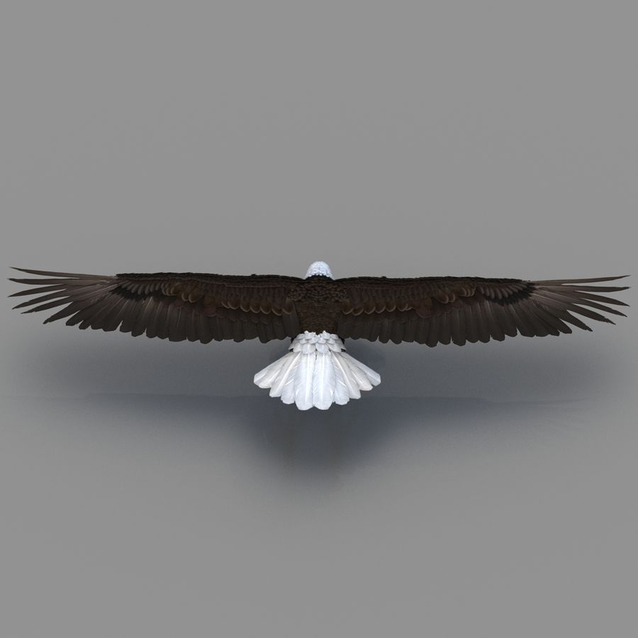 Bald Eagle Rigged royalty-free 3d model - Preview no. 34