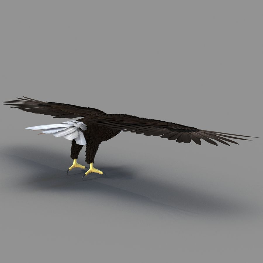 Bald Eagle Rigged royalty-free 3d model - Preview no. 35