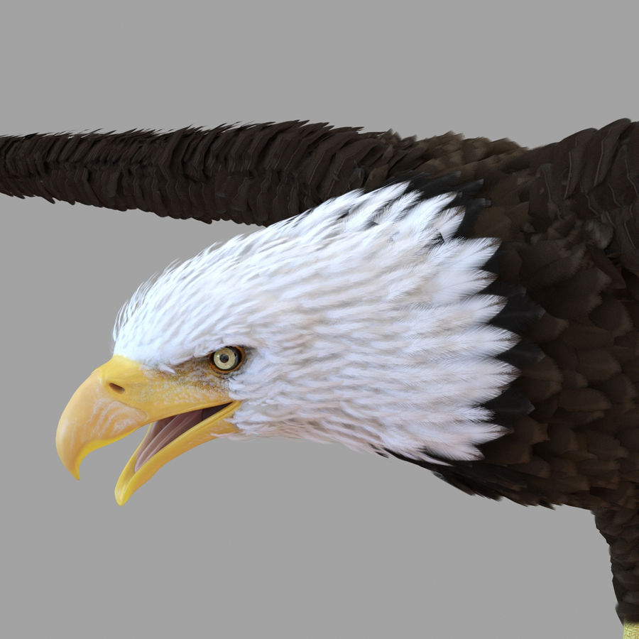 Bald Eagle Rigged royalty-free 3d model - Preview no. 52