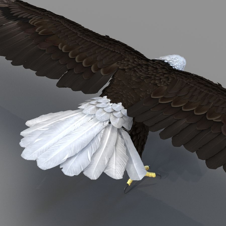 Bald Eagle Rigged royalty-free 3d model - Preview no. 51