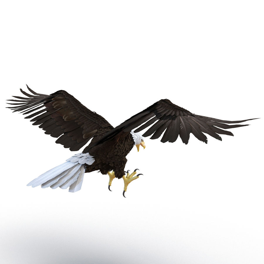 Bald Eagle Rigged royalty-free 3d model - Preview no. 20