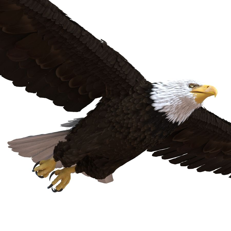 Bald Eagle Rigged royalty-free 3d model - Preview no. 42