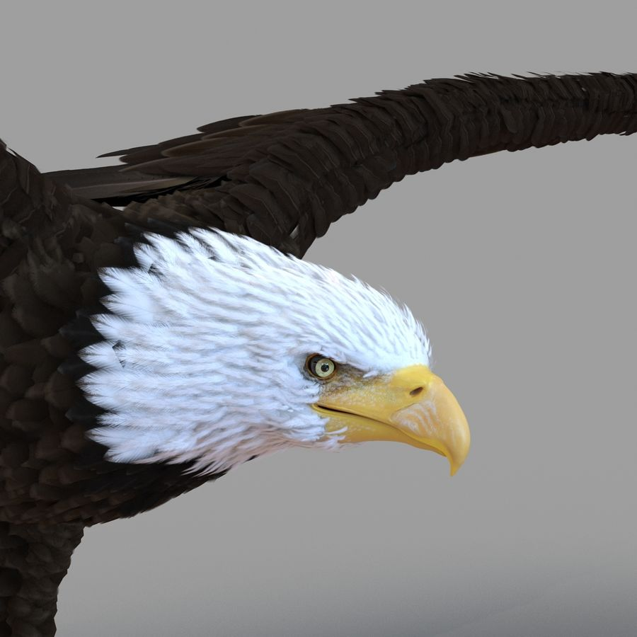 Bald Eagle Rigged royalty-free 3d model - Preview no. 37