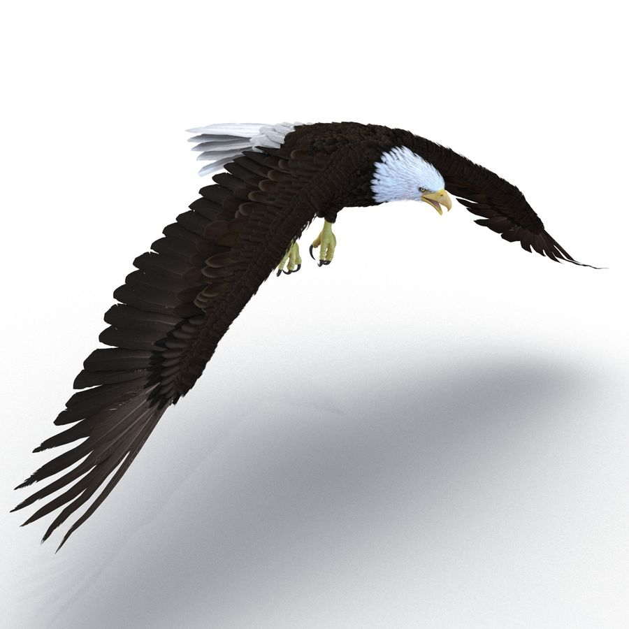 Bald Eagle Rigged royalty-free 3d model - Preview no. 23