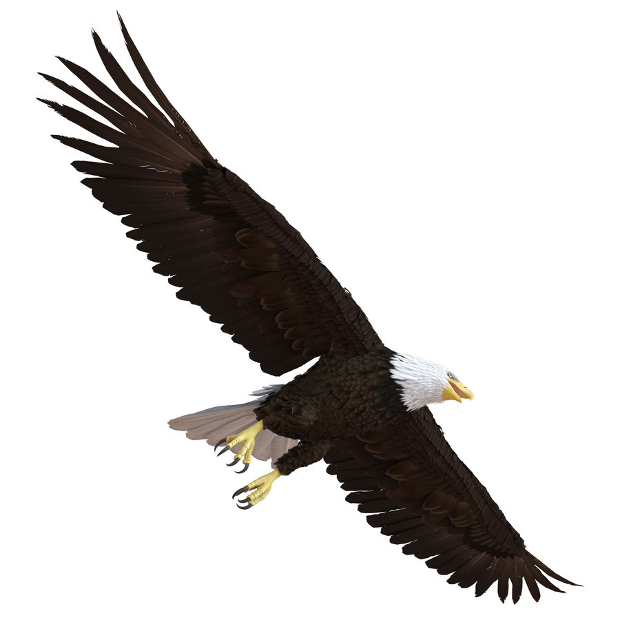 Bald Eagle Rigged royalty-free 3d model - Preview no. 18