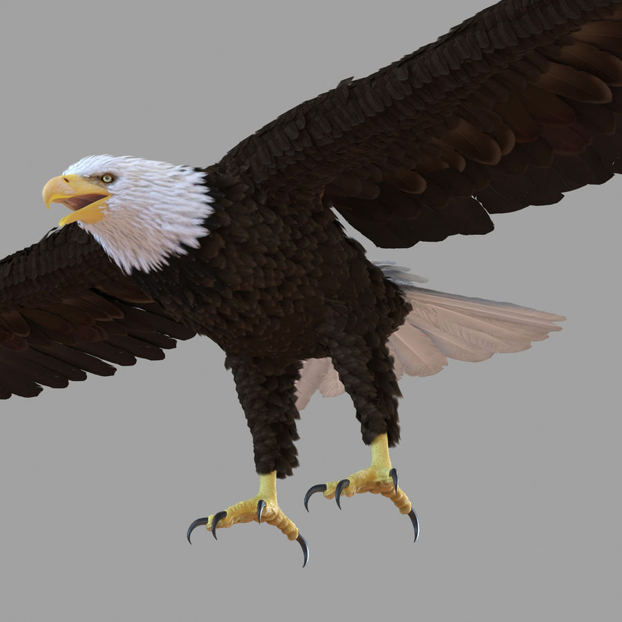 Bald Eagle Rigged royalty-free 3d model - Preview no. 48