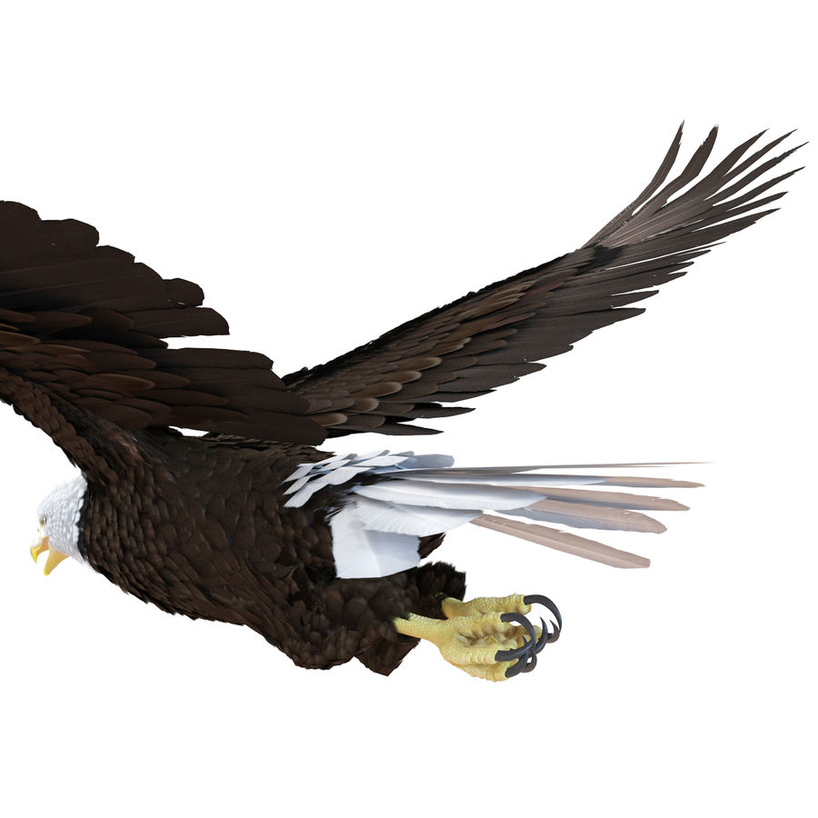 Bald Eagle Rigged royalty-free 3d model - Preview no. 41