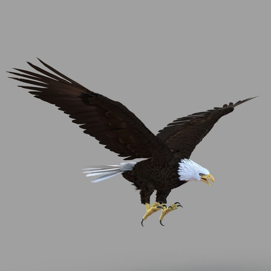 Bald Eagle Rigged royalty-free 3d model - Preview no. 8