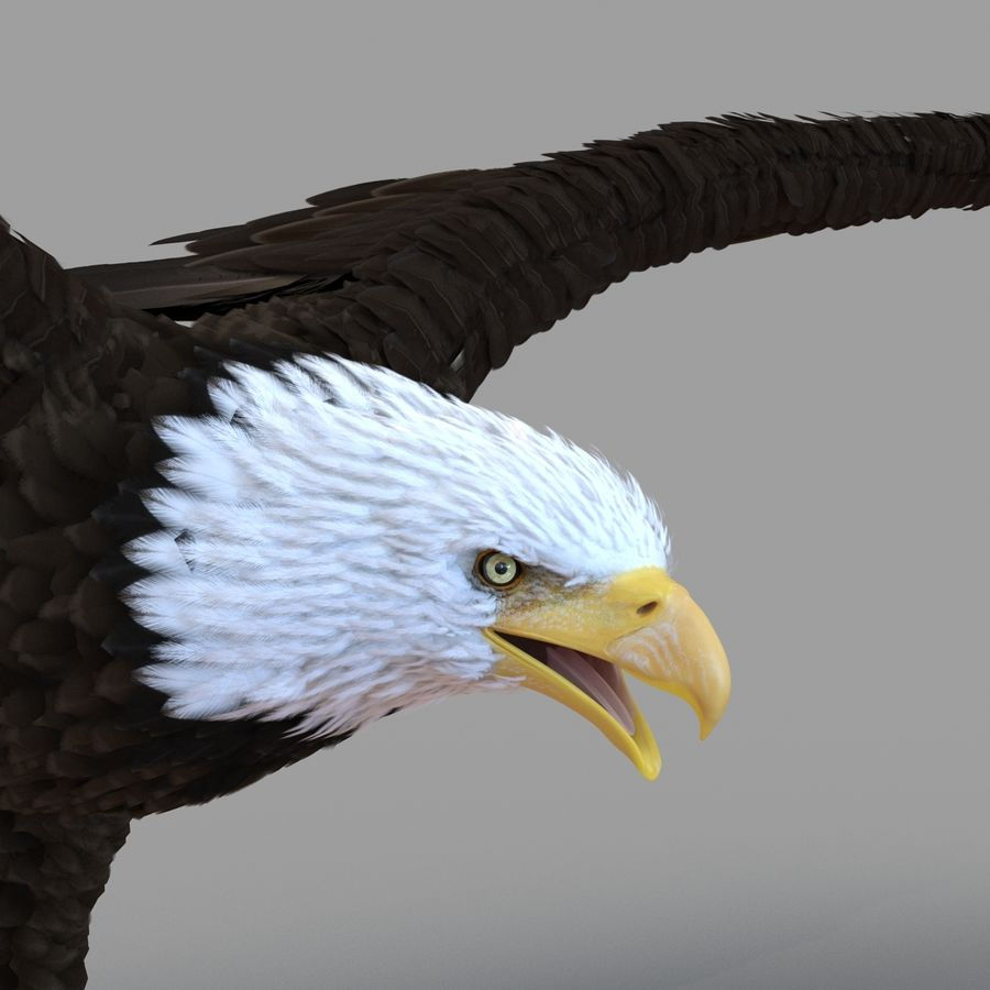 Bald Eagle Rigged royalty-free 3d model - Preview no. 36
