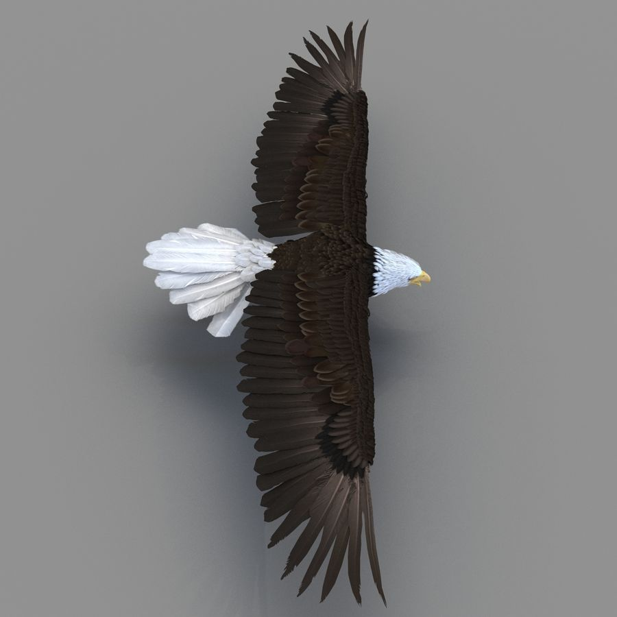 Bald Eagle Rigged royalty-free 3d model - Preview no. 32