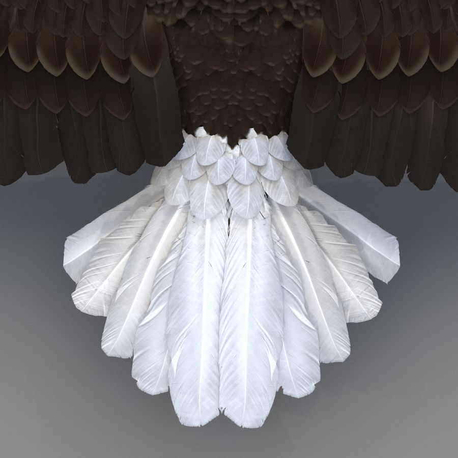 Bald Eagle Rigged royalty-free 3d model - Preview no. 57