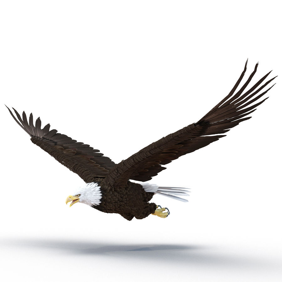 Bald Eagle Rigged royalty-free 3d model - Preview no. 7
