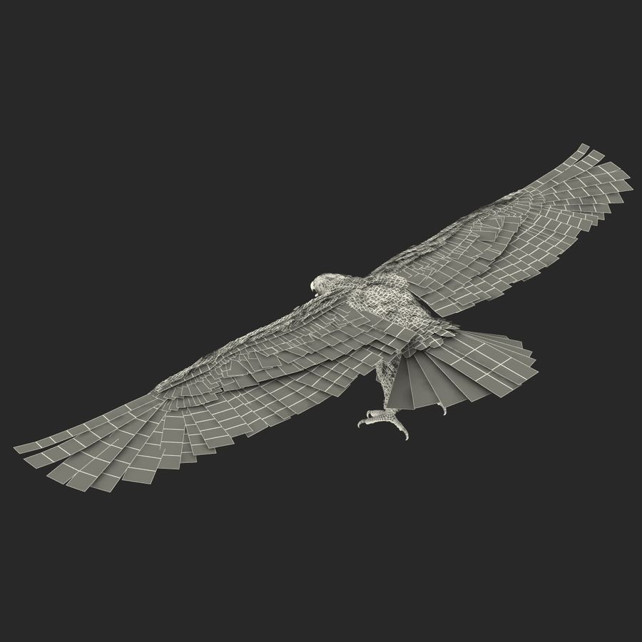 Bald Eagle Rigged royalty-free 3d model - Preview no. 67