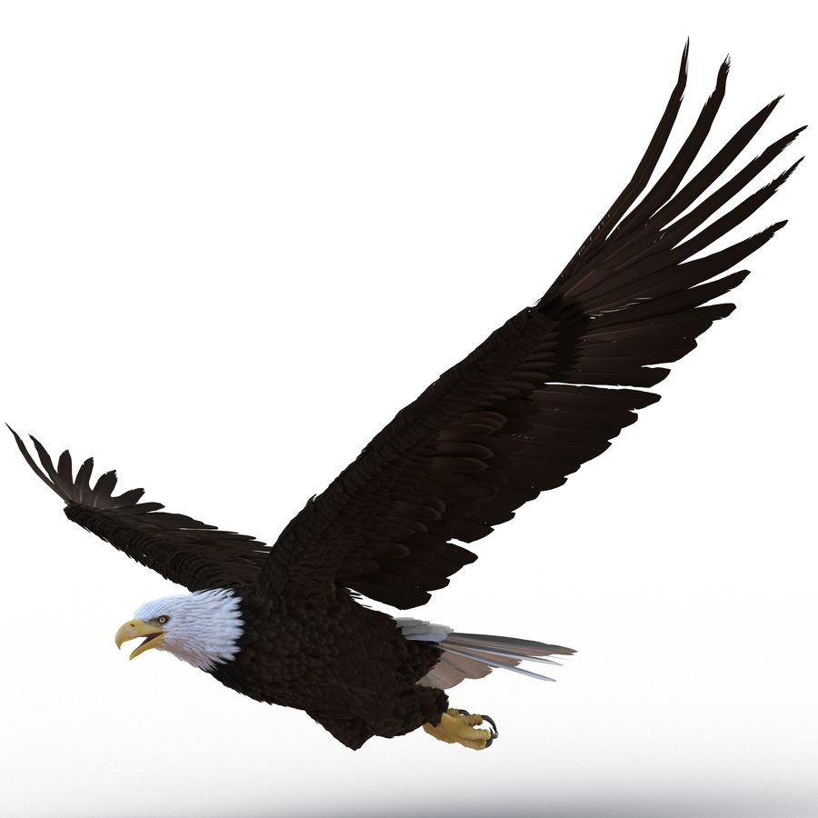 Bald Eagle Rigged royalty-free 3d model - Preview no. 26