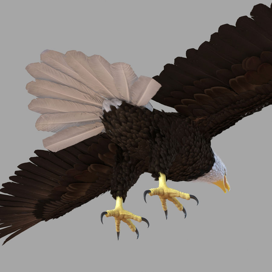 Bald Eagle Rigged royalty-free 3d model - Preview no. 49