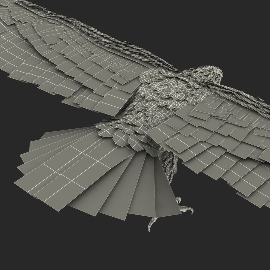 Bald Eagle Rigged royalty-free 3d model - Preview no. 69