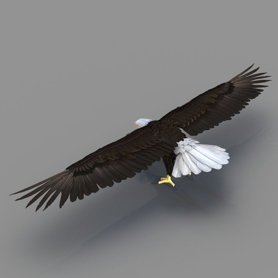 Bald Eagle Rigged royalty-free 3d model - Preview no. 33