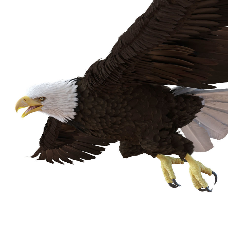 Bald Eagle Rigged royalty-free 3d model - Preview no. 47