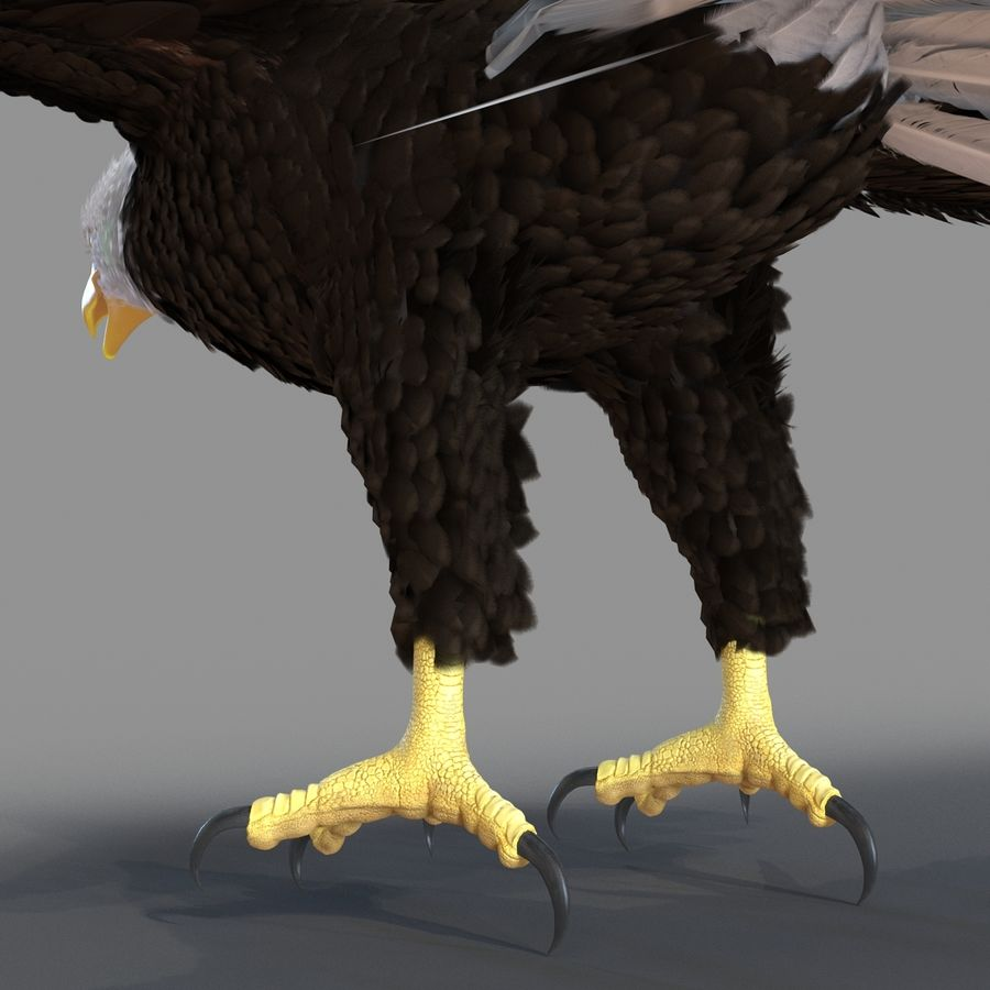 Bald Eagle Rigged royalty-free 3d model - Preview no. 55