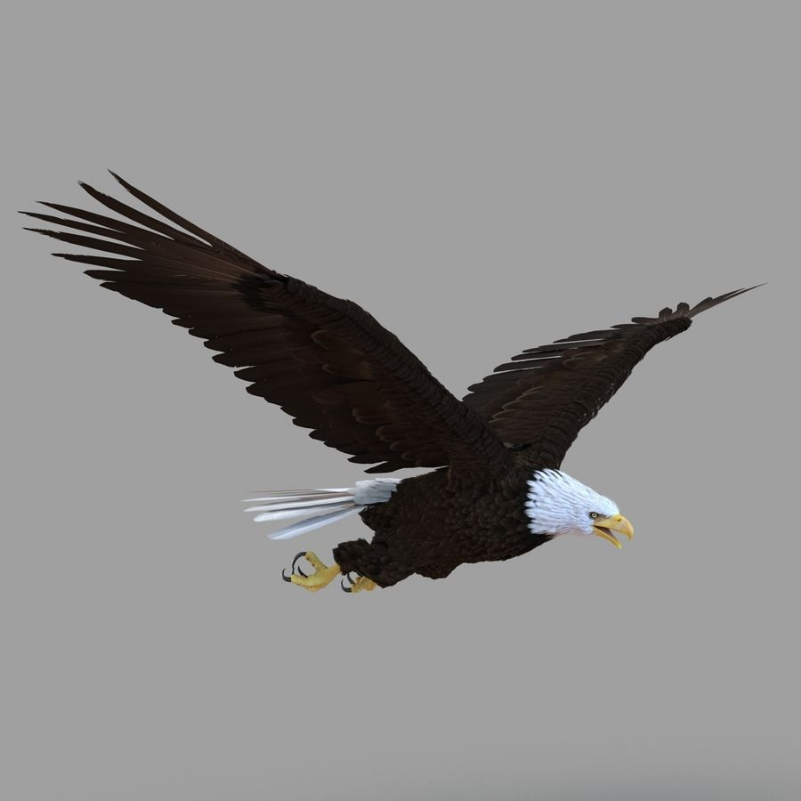 Bald Eagle Rigged royalty-free 3d model - Preview no. 9