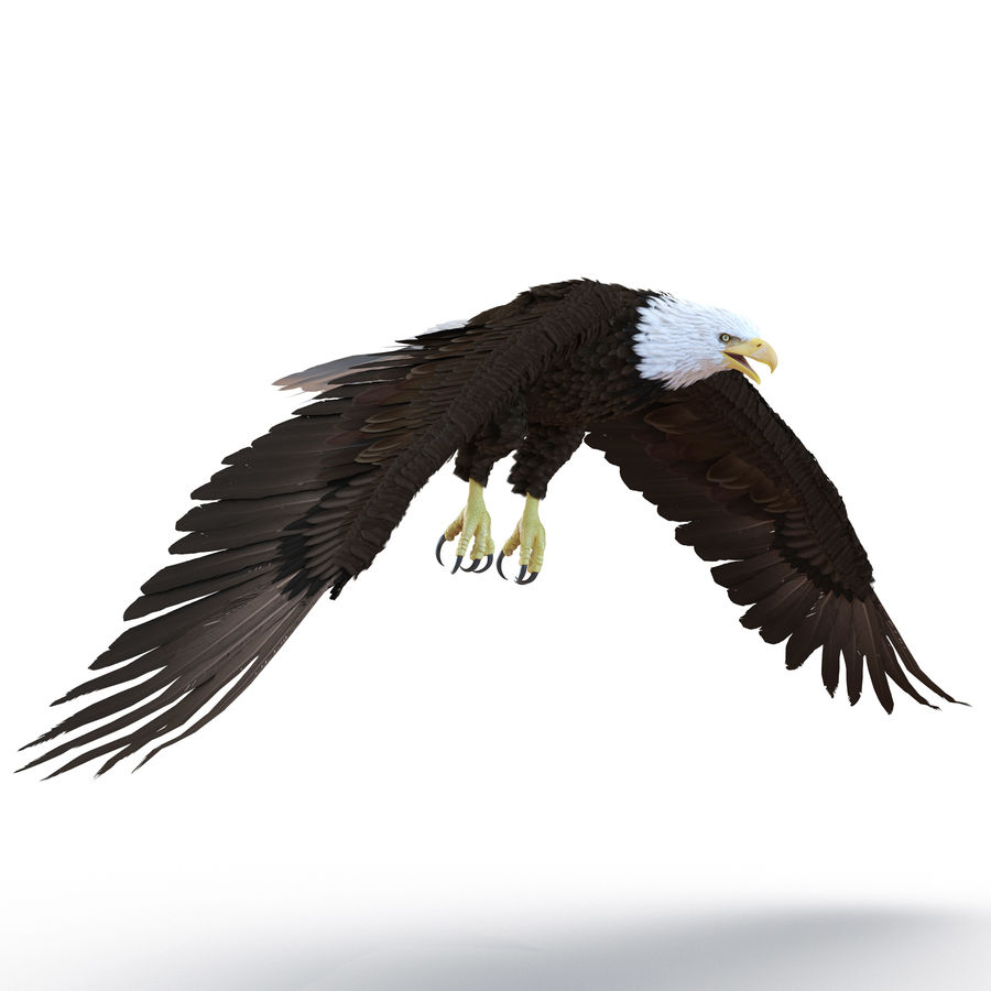 Bald Eagle Rigged royalty-free 3d model - Preview no. 22