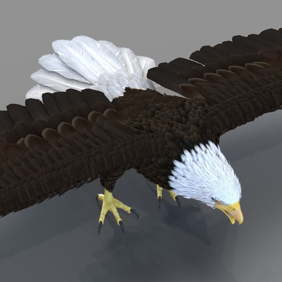 Bald Eagle Rigged royalty-free 3d model - Preview no. 50